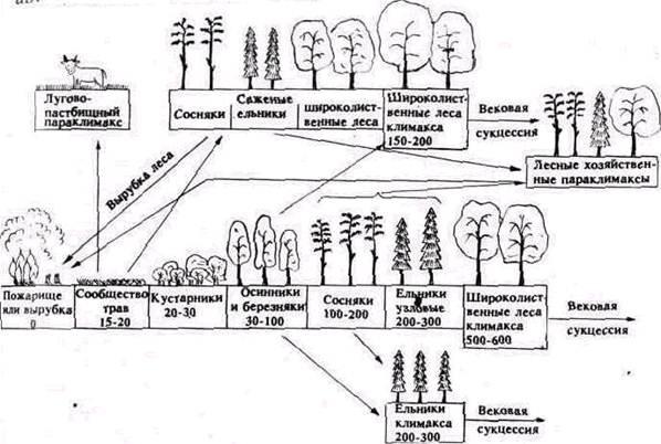 Схема сукцессионных смен в